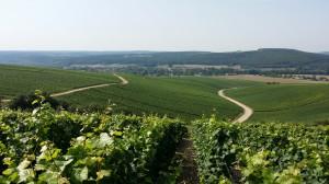 Vignoble de Buxeuil (Côte des Bar)