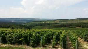 Vignoble des Riceys (Côte des Bar)