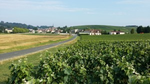Vignoble du Petit Morin (Etoges)