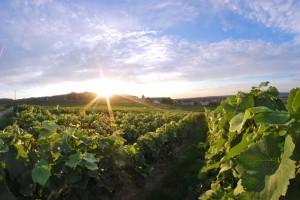 Vignoble Vrigny